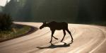 Vairavimo ypatumai vasarą – greičio pedalą spaudžia stipriau, į ženklus dairosi rečiau