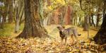 Miestiečių turtą saugo metalinės durys ir tvoros, kaimo žmonių – šunys